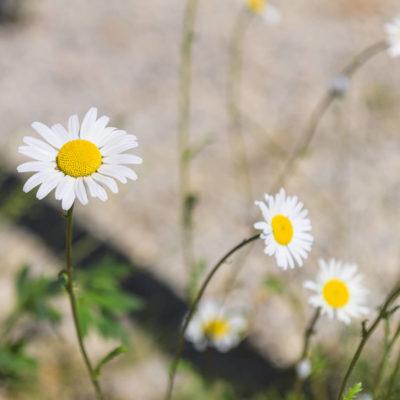 WEB Cretaiole Spring 2020-6980